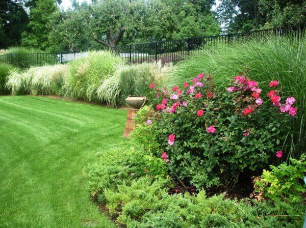 Виды шиповника для украшения сада