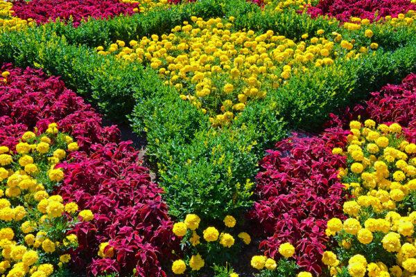 Яркие однолетние цветы