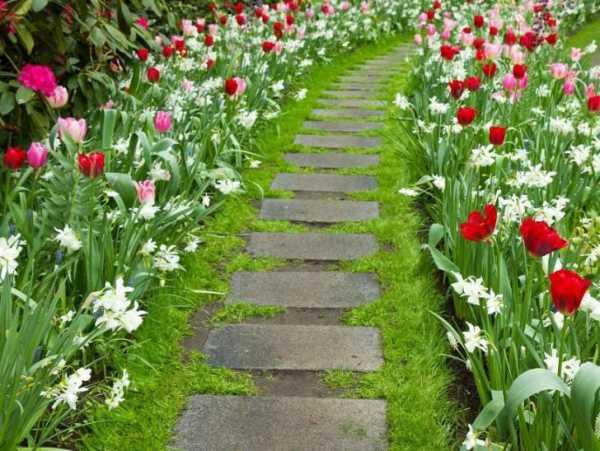 Цветы вдоль дорожек
