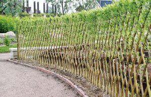 Как сделать живую изгородь из ивы своими руками