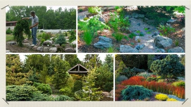 Разновидности растений для небольших дачных участков