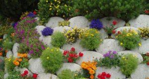 Выбираем растения для альпийской горки