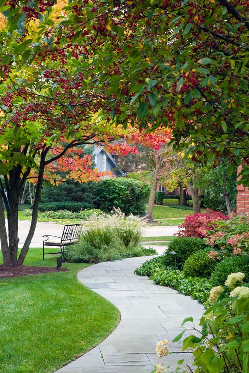 Подбор и посадка лиственных деревьев